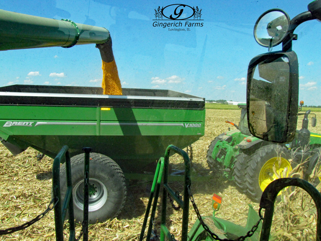 Loading auger cart at Gingerich Farms