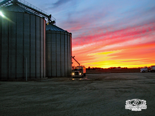 Harvest Sunset at Gingerich Farms