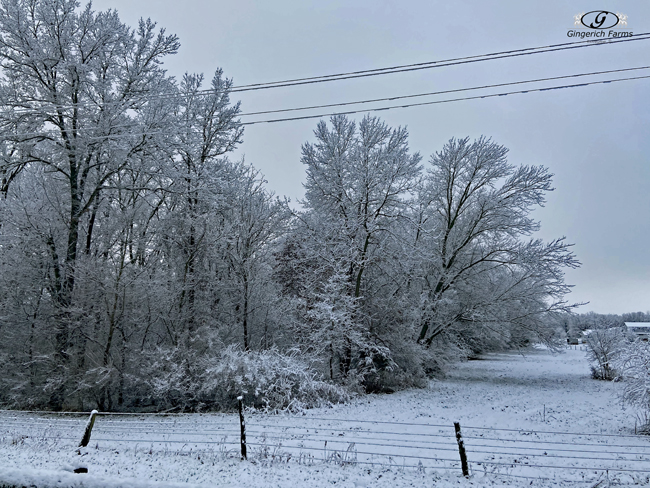 Trees - Gingerich Farms