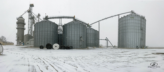 Snowy Wednesday - Gingerich Farms