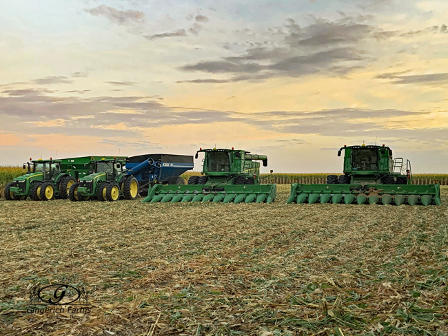 Corn combine at Gingerich Farms