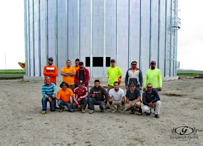 Workers for the bin at Gingerich Farms