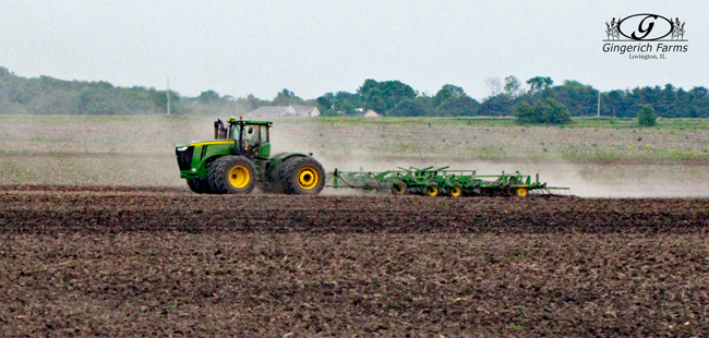 Cultivating at Gingerich Farms
