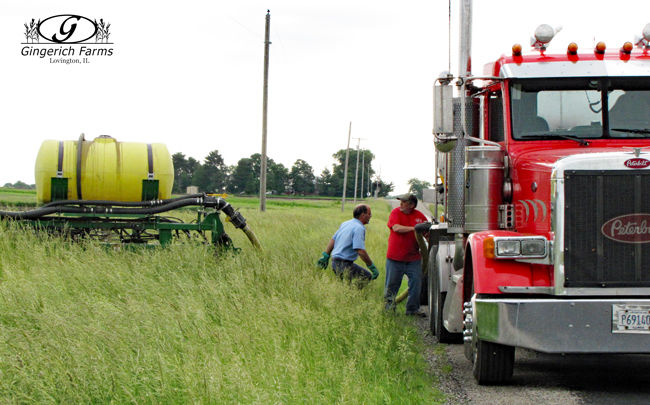 Loading starter at Gingerich Farms