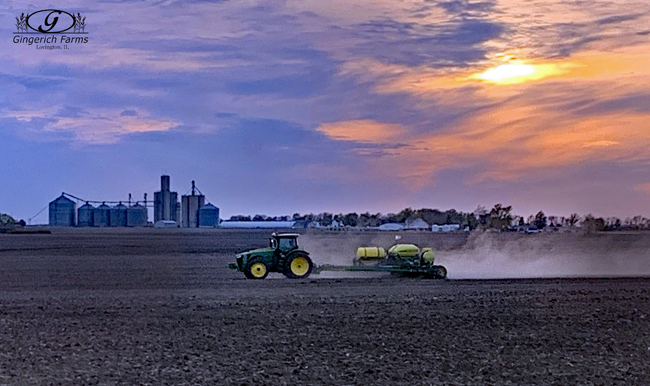 corn planting at Gingerich Farms