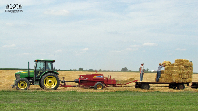 Baling wheat straw at Gingerich Farms