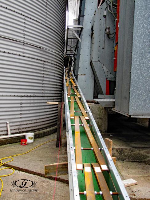 Grain conveyor at Gingerich Farms