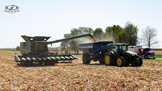 Unloading corn at Gingerich Farms