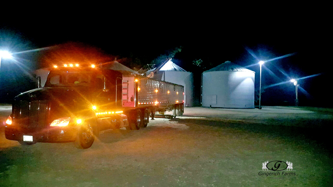 Unloading at bin - Gingerich Farms