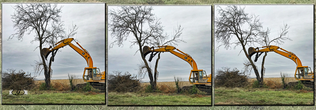 Taking down tree - Gingerich Farms