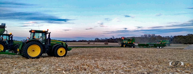 Last corn Field - Gingerich Farms