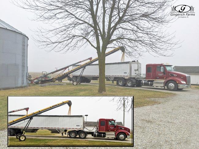 Bean hauling at Gingerich Farms