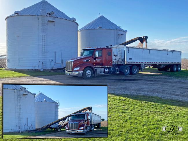 Loading from Bin - Gingerich Farms