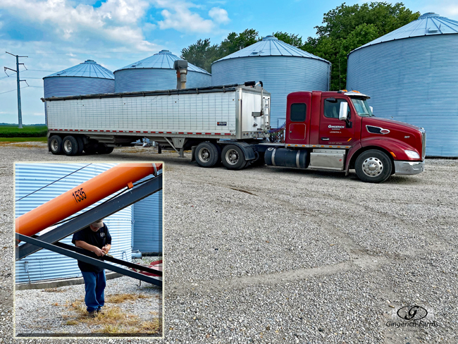 Loading beans - Gingerich Farms