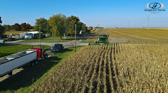 Opening Field - Gingerich Farms
