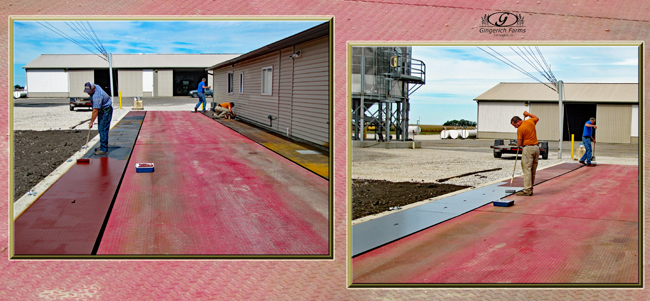 Painting scales borders at Gingerich Farms