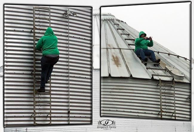 Climbing bin at Gingerich Farms