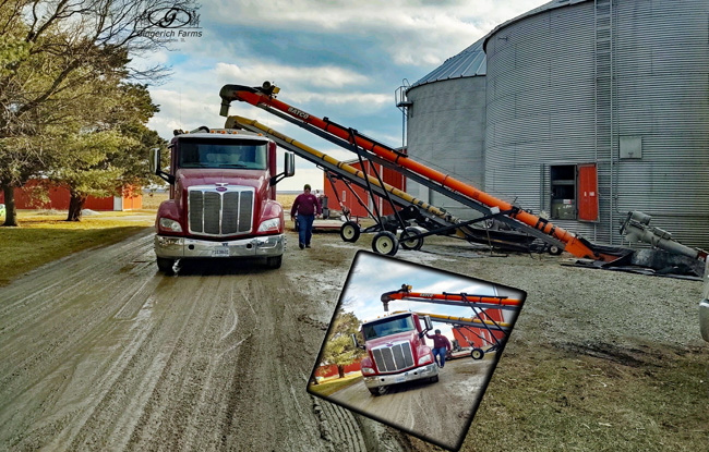 Loading beans at Gingerich Farms