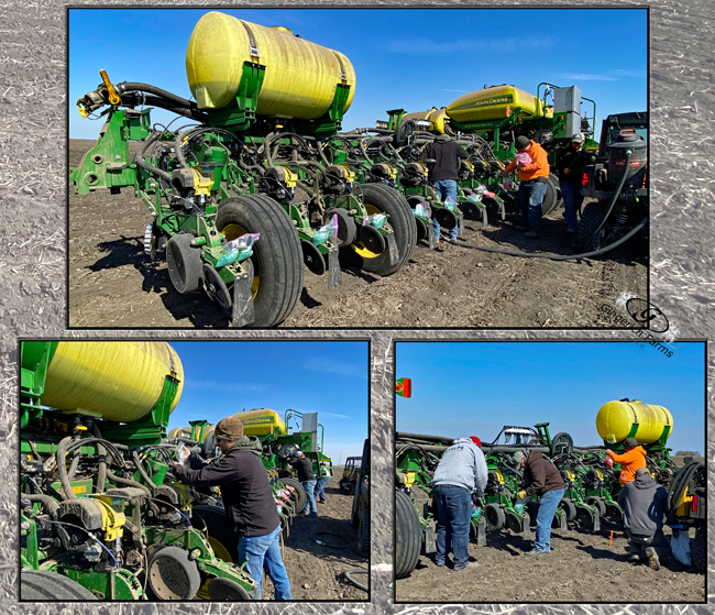 Plot corn - Gingerich Farms