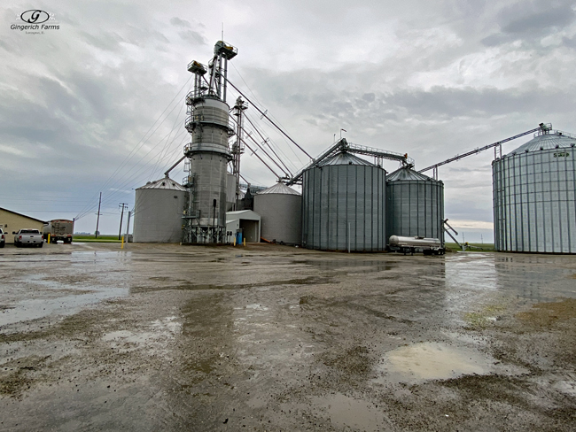 Rainy at GC -Gingerich Farms