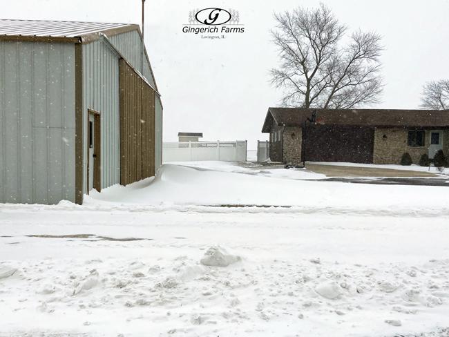 Snow Drift - Gingerich Farms