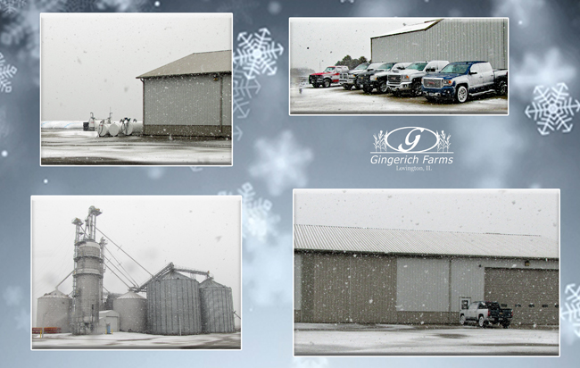 Snowing at Gingerich Farms