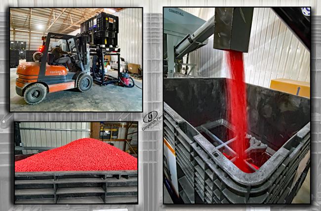 Treating bean - Gingerich Farms