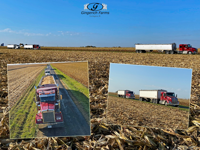 Trucks lined up - Gingerich Farms