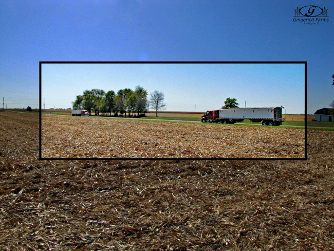 Two trucks waiting at Gingerich Farms