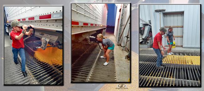 Unloading truck - Gingerich Farms