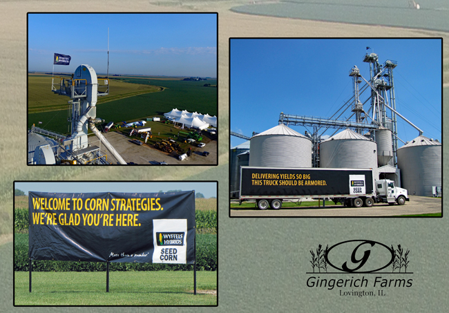 Wyffels Corn Strategies at Gingerich Farms