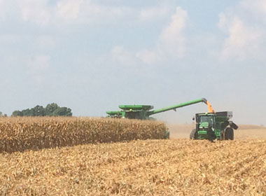 Gingerich Farms shelling corn harvest 2015