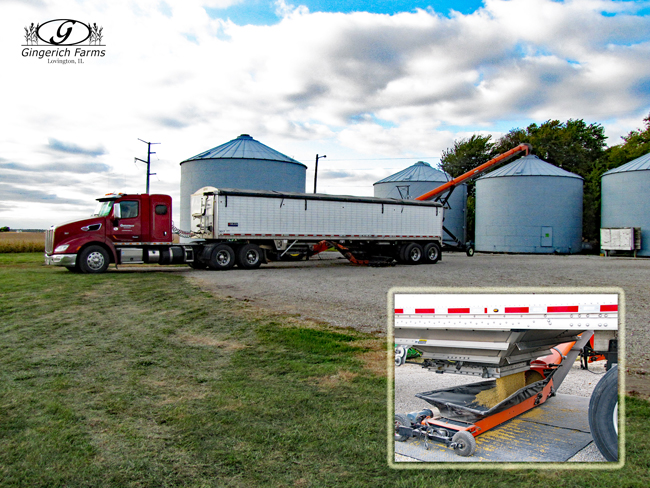 Unloading beans at bin at Gingerich Farms